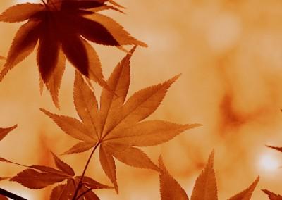 Autumn Burning LinkedIn Background